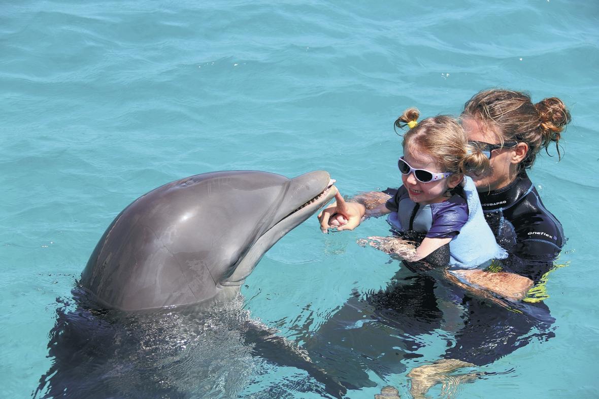 از دلفین درمانی چه می دانید؟