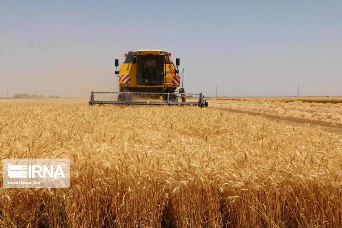 خبرنگاران فراوری گندم در خوشاب افزایش یافت