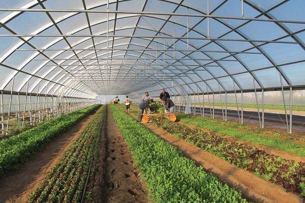 گلخانه های دریایی سال جاری راه اندازی می شوند، کشاورزی با آب شور دریا