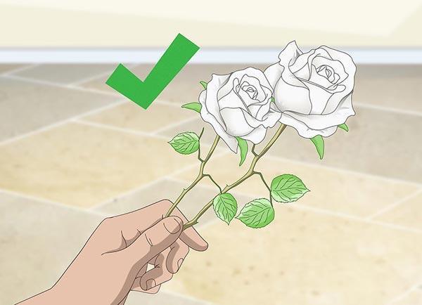 آموزش رنگ کردن گل رز طبیعی به صورت تک رنگ و چند رنگ